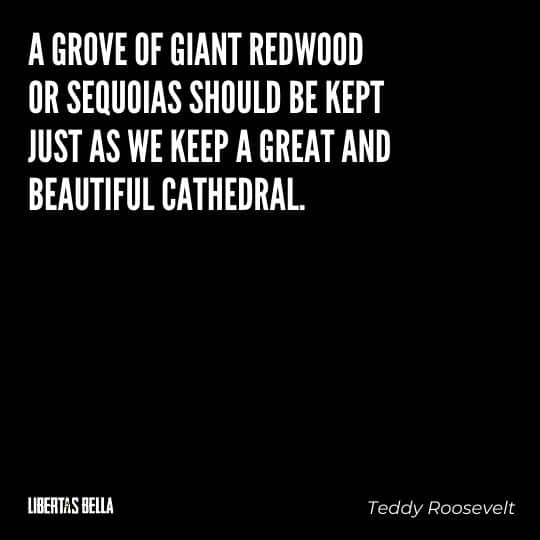 """Teddy Roosevelt Quotes - """"A grove of giant redwood or sequoias should be kept just as we keep a great and beautiful cathedral."""""""