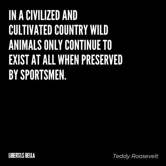 """Teddy Roosevelt Quotes - """"In a civilized and cultivated country wild animals only continue to exist at all when preserved by sportsmen..."""""""